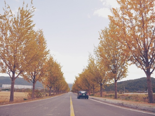 (釜山出发) 庆州包车一日游