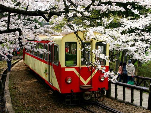 嘉義→阿里山→台南包車一日遊