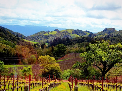 San Francisco→Napa Valley One-day Tour