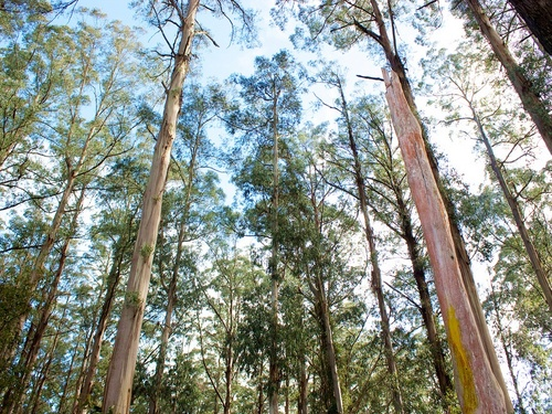 Dandenong Ranges One-day Tour